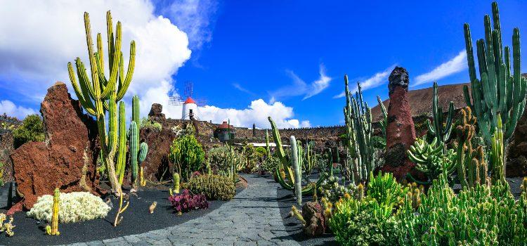 lanzarote-cactus-garden